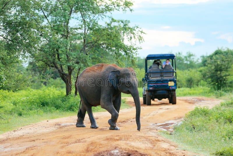 Amazing elephants. royalty free stock photography