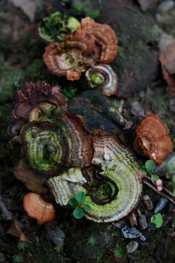 mushroom patterns royalty free stock image