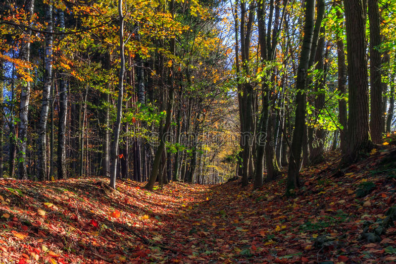 Download Amazing Fall Forrest. stock photo. Image of ground, nature - 35147914