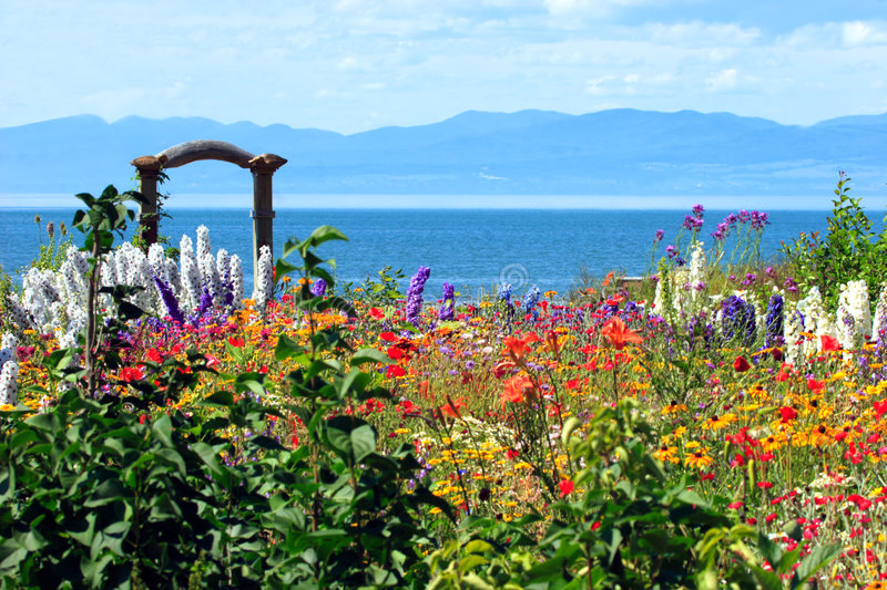 Amazing flower garden. This is a colorful and amazingly beautiful wild garden photographed on the shore of the St-Lawrence river in the region of Kamouraka royalty free stock photos