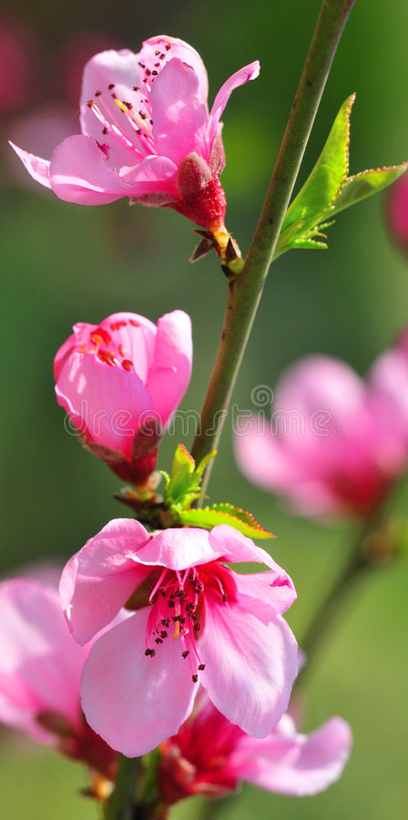 Amazing Flowers stock photo