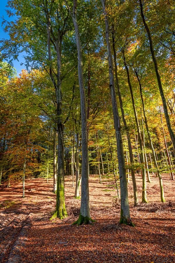 Amazing forest in the fal with sun beaml, Poland. Europe stock photo
