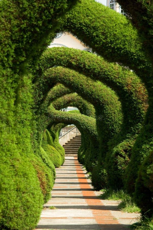 Juniper Sculptures, Costa Rica. Sculpted juniper bush topiary garden in Zarcero, Costa Rica
