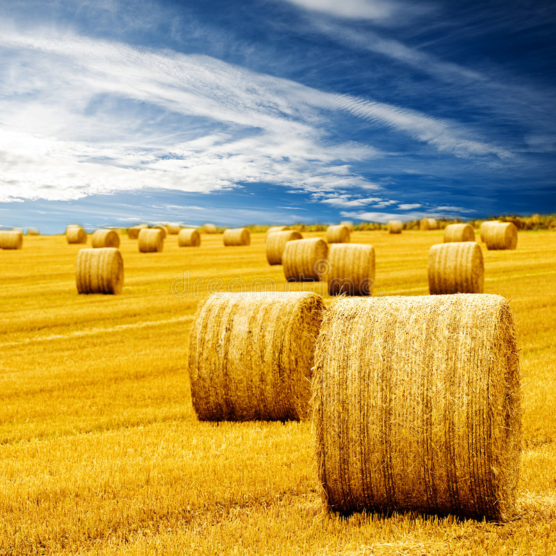 Free Amazing Golden Hay Bales Stock Image - 6657471