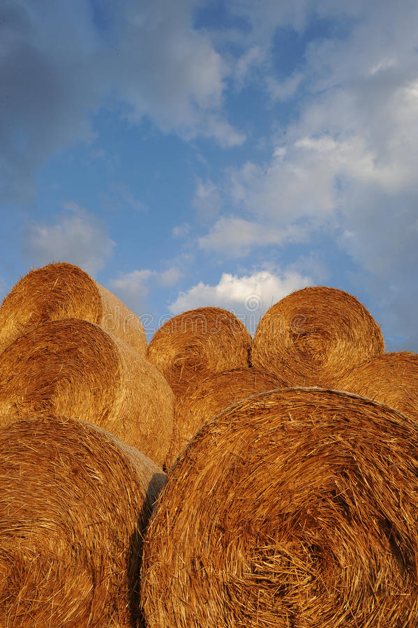 Download Amazing Golden Hay Bales stock image. Image of food, circle - 41339613