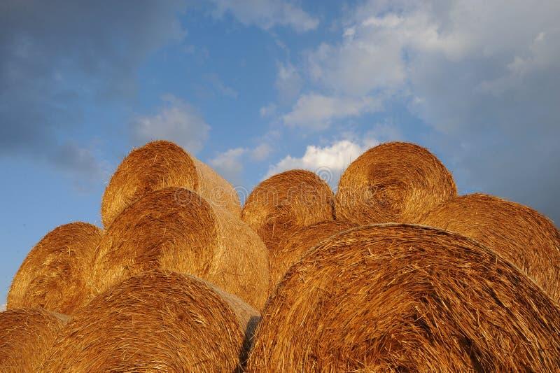 Download Amazing Golden Hay Bales stock image. Image of meadow - 41339725