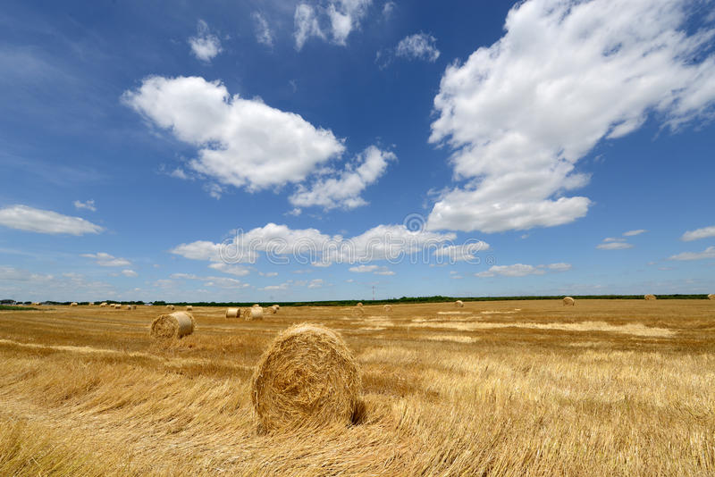 Amazing Golden Hay Bales royalty free stock image