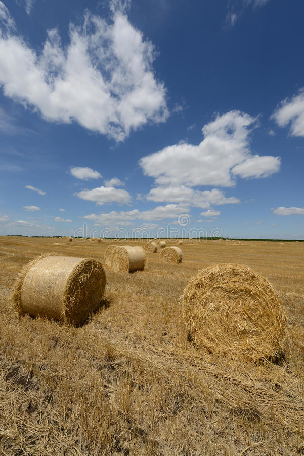 Amazing Golden Hay Bales royalty free stock photo