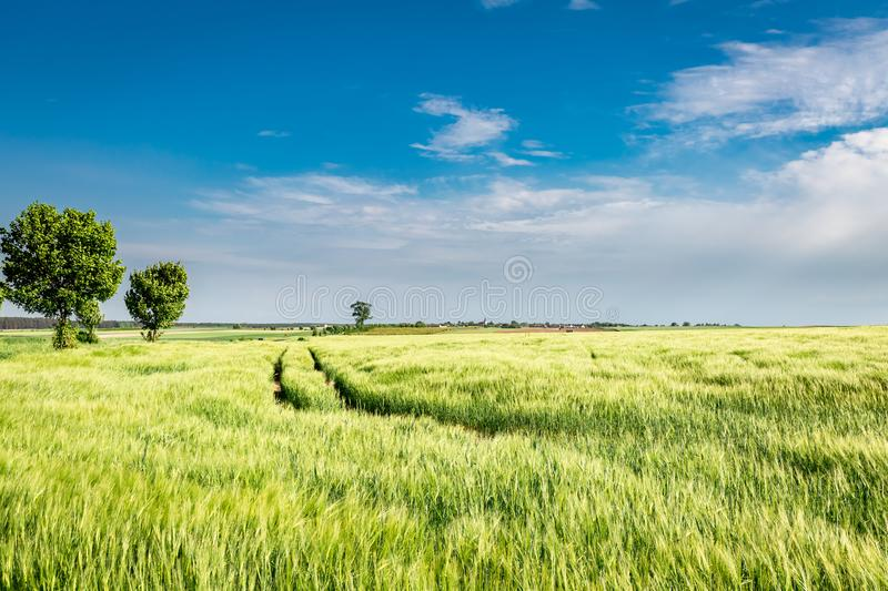 Amazing green field with country road in sunny day stock photo