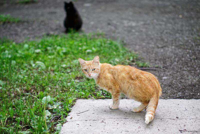 Amazing homeless red and black cats. The responsibility of people for tamed animals. Daylight royalty free stock photography