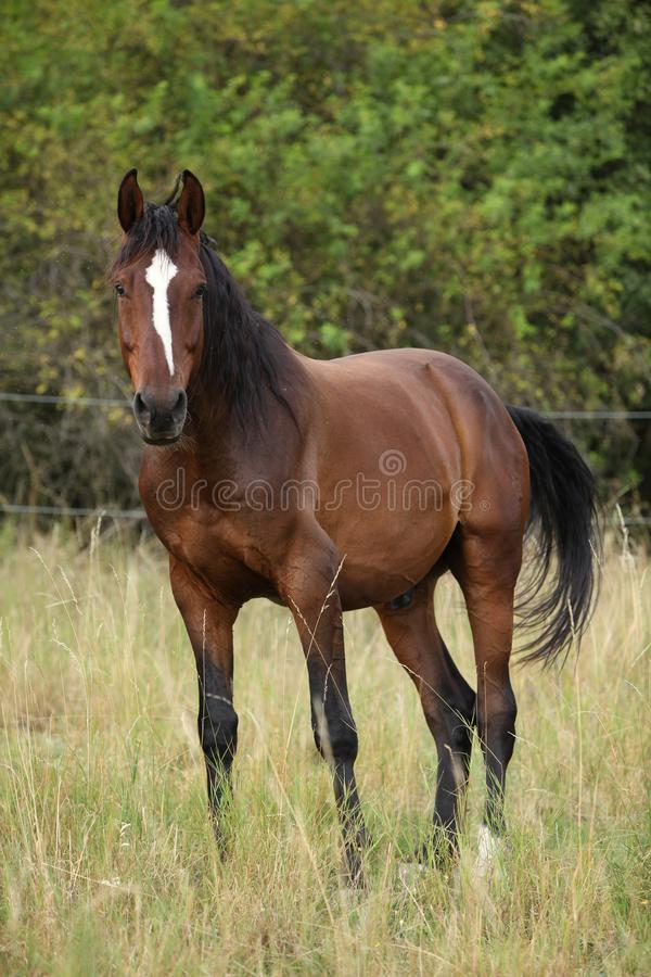 Amazing horse with nice mane on pasturage. In summer royalty free stock photo