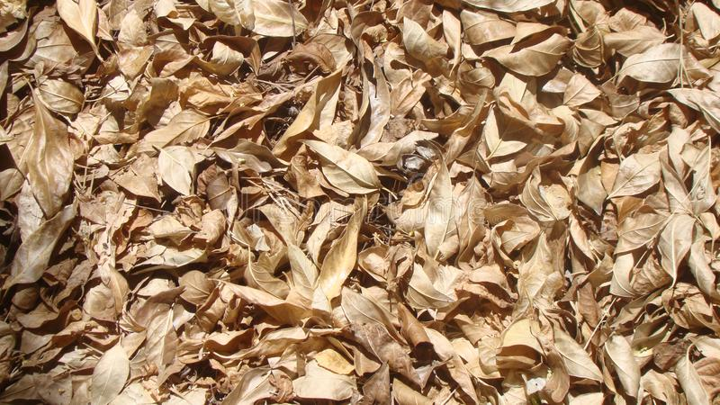 Amazing Image of Leaf Ground Cover royalty free stock photo