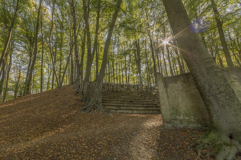 Amazing image of the staircase of a ancient amphitheater in the open air in the middle of the forest royalty free stock images