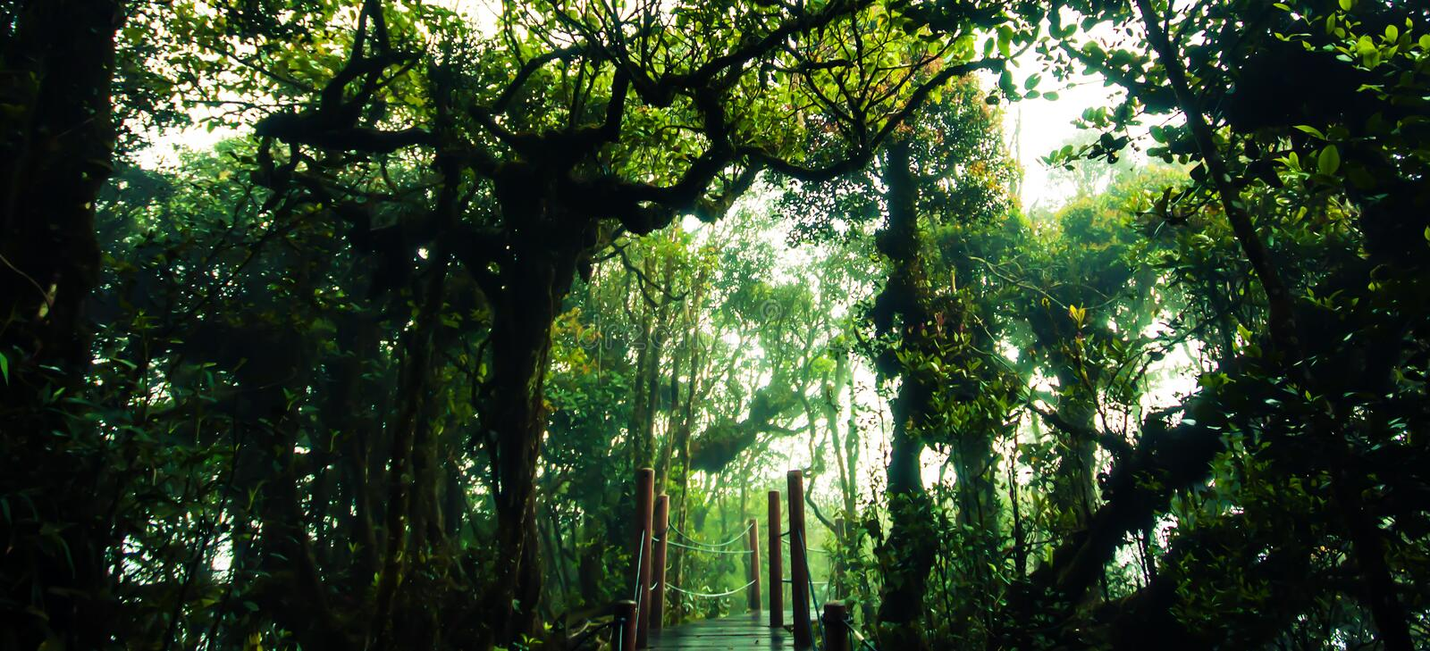Amazing jungle trail with thick green trees and branches in Moss stock photography