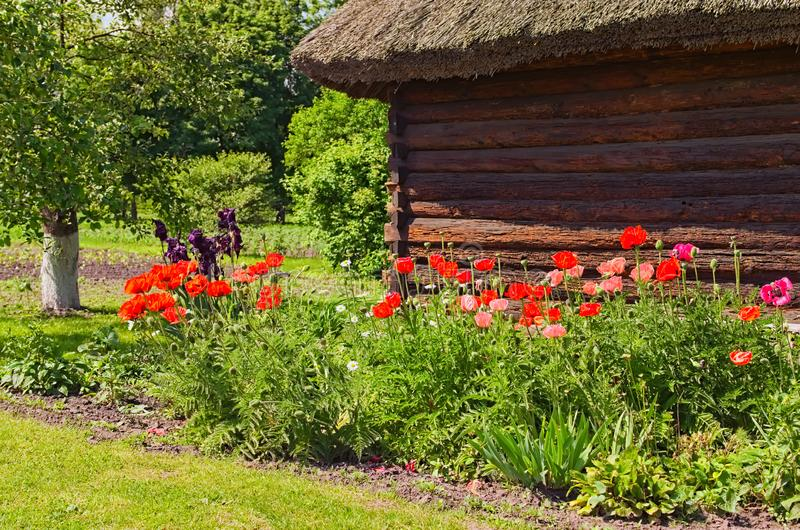 Amazing landscape of ancient wooden house with flower bed in sunny spring day. stock photography