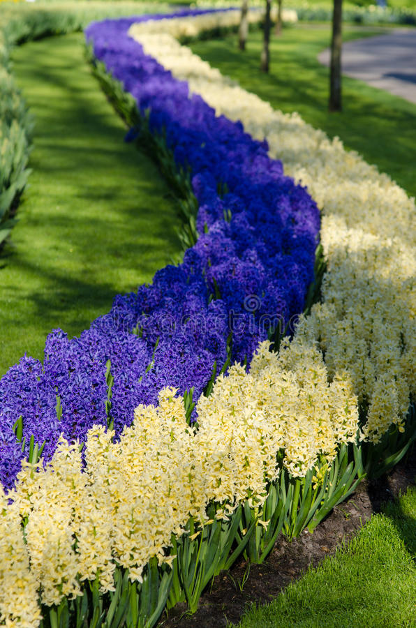 Amazing landscape with colorful flower beds and flower patterns royalty free stock images