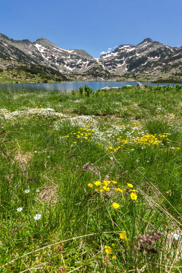 Amazing landscape of Dzhangal peak, Popovo lake and yellow flowers in front, Pirin Mountain stock photography