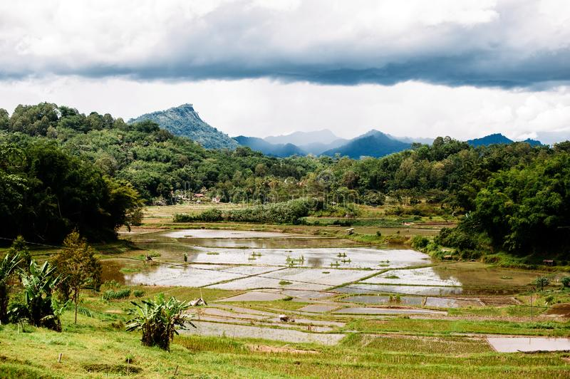Amazing landscape of South Sualwesi, Rantepao, Tana Toraja, Indonesia. Rice fields with water, mountains, cloudy sky. royalty free stock image