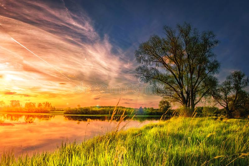 Amazing landscape of summer nature on river shore at sunset with colorful cloudy sky. Perfect scene large tree on grassy bank. Of lake. Grass glowing on warm stock photos