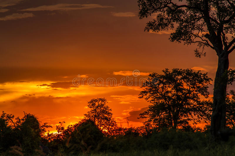 Amazing landscape of sunset and savannah in kruger Park, South Africa stock photography