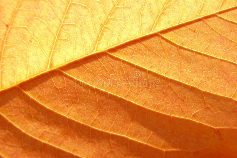 Download Amazing leaf texture stock photo. Image of detail, huge - 2868280