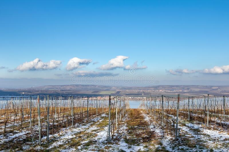 Amazing moravian winter countryside with vineyards stock photos