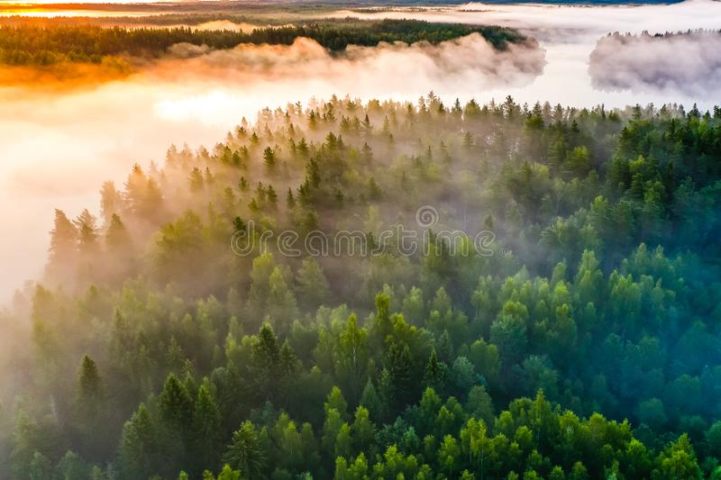 Amazing morning concept. Aerial landscape. Thick fog surrounds forest stock photo