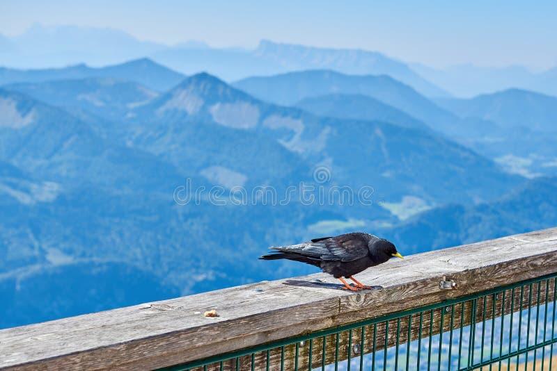 Amazing mountain view with a bird in foreground in Austrian Alps. Salzkammergut region stock photo