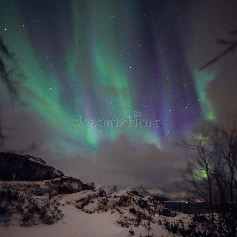 Amazing multicolored green Aurora Borealis also know as Northern Lights in the night sky over Lofoten landscape, Norway, Scandinav stock photo