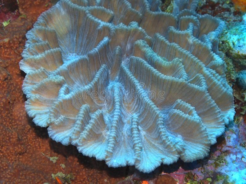 Stone coral stock photography