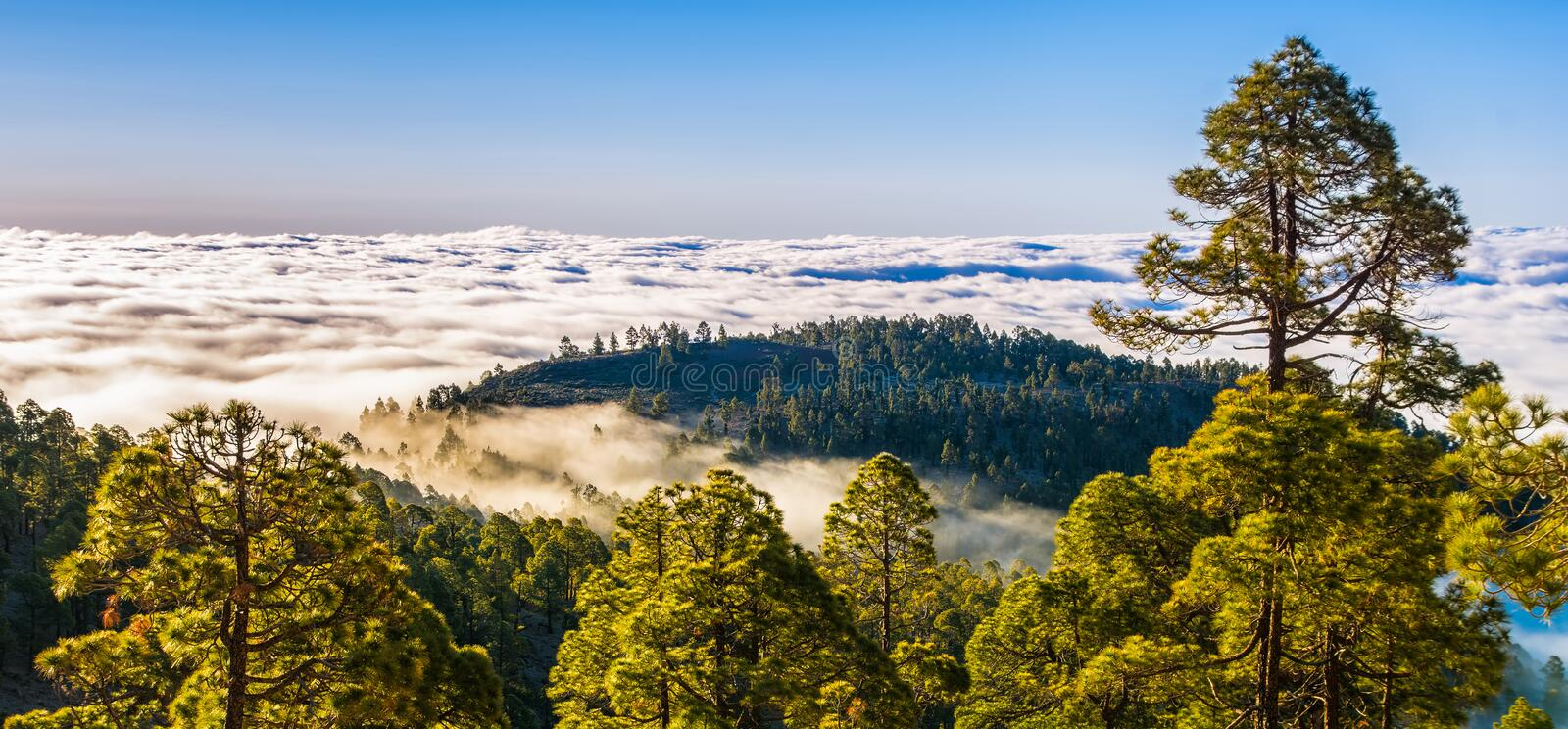 Amazing natural landscape of foggy mountains. Forest natural. Location: Tenerife, Canary Islands. Artistic picture. Beauty world. Amazing natural landscape of royalty free stock photos