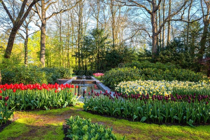 Amazing nature landscape, flowering royal garden Keukenhof at spring time, travel background, Netherlands royalty free stock images
