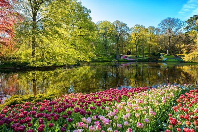 Amazing nature landscape, flowering royal garden Keukenhof at spring time, travel background, Netherlands royalty free stock photo