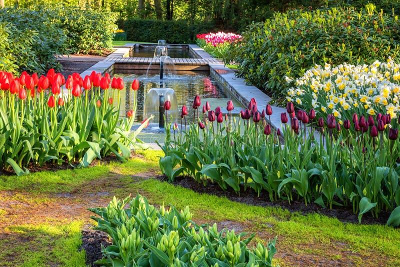 Amazing nature landscape, flowering royal garden Keukenhof at spring time, travel background, Netherlands stock image