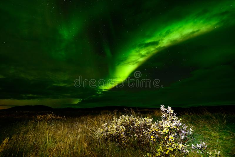 Amazing Northern Lights over the Iceland sky. The bright dancing lights of the Aurora Borealis. Green light in beautiful nightscape stock image