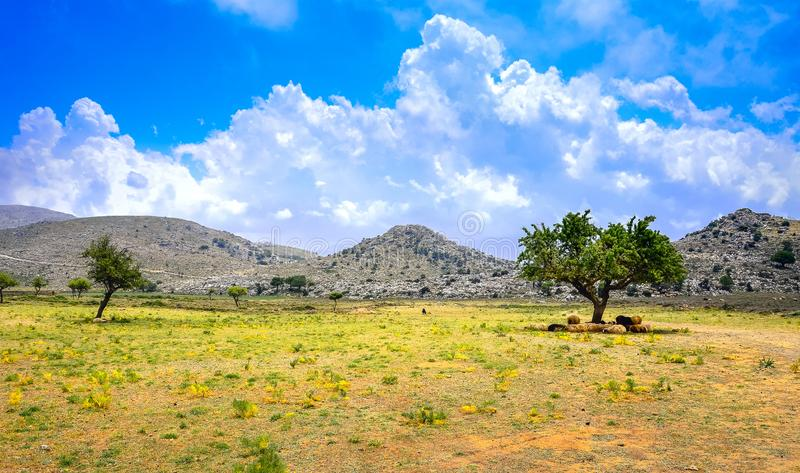 Amazing panorama of rough wild mountains, grass, cloudy blue sky, Lasithi, Crete. Greece stock image