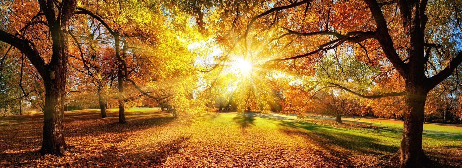 Amazing panoramic autumn scenery in a park stock photography