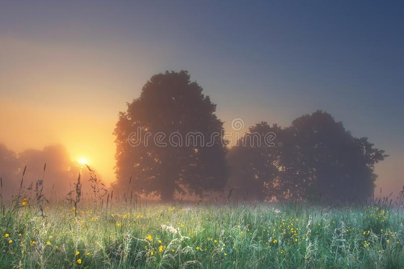 Amazing perfect landscape of summer meadow with trees in the foggy morning at bright sunrise with warm sunlight behind tree royalty free stock image