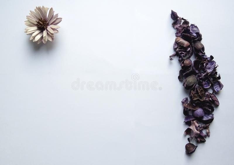 Amazing purple flower and leaves with white background. It can use for your background or royalty free stock images