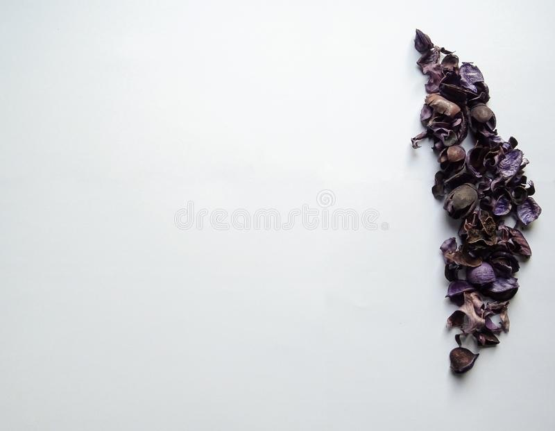 Amazing purple leaves with white background. It can use for your background or royalty free stock photos