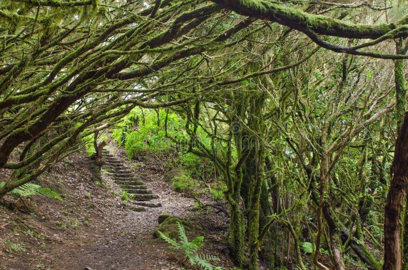 The amazing rain-forest in La Gomera stock photos