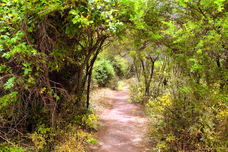 The amazing rain-forest in La Gomera royalty free stock photography