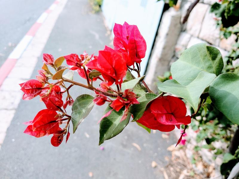 Amazing red flower. On the street background stock image