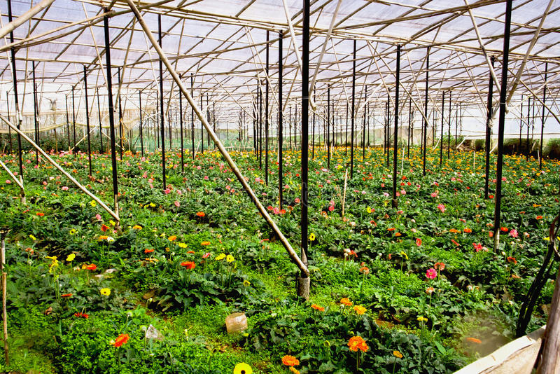 Download Amazing Repetitive Greenhouse Field Structure Stock Image - Image: 26798573