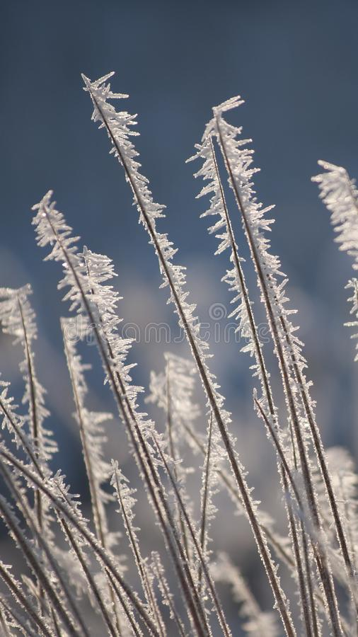 Free Amazing Rime And Frost Crystals On Grass In Sunlight Royalty Free Stock Photo - 103379915