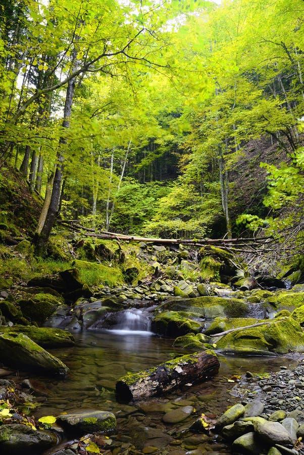 Amazing river