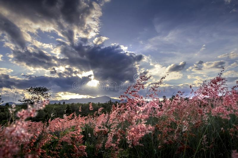 Amazing romanticlandscape with wild pink flowers, beautiful cloudy sky and mountain in the background royalty free stock images
