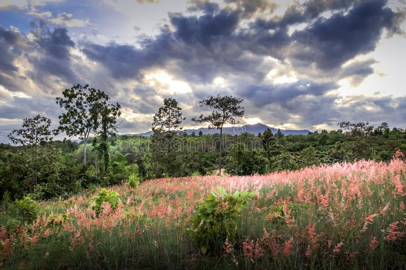 Amazing romanticlandscape with wild pink flowers, beautiful cloudy sky and mountain in the background royalty free stock photography