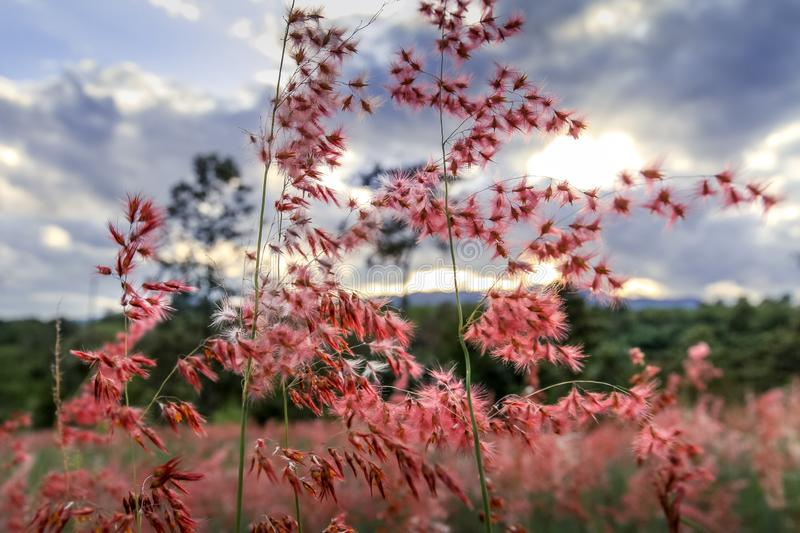 Amazing romanticlandscape with wild pink flowers, beautiful cloudy sky and mountain in the background stock images
