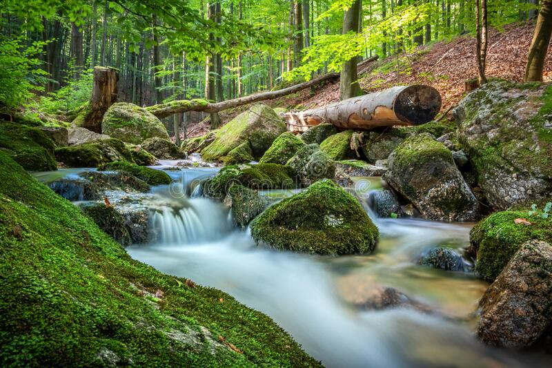 Amazing scenery of creek with cascades in summer forest royalty free stock images